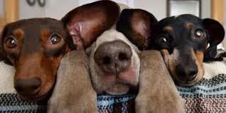Dog At Vet Meme - 10 fresh dog memes 1 when dog realizes we take him to the vet