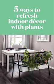 Home Decor With Plants by The 55 Best Images About Home Decor Ideas On Pinterest