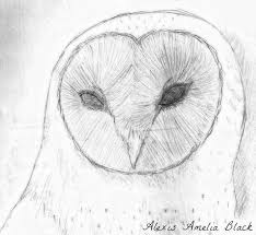 barn owl sketch by graphitestrike on deviantart