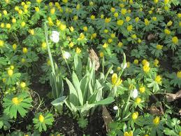 winter gardens sunderland restlessjo