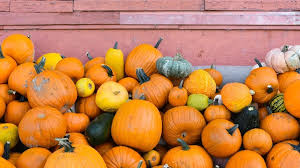 the 10 best pumpkin patches to explore this fall seattle refined