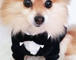 pet wedding apparel etsy