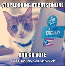 Voting Meme - obama caign deploys cat meme to get out the vote in ohio observer