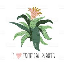 Tropical Home Decor Hand Drawn Wild Tropical House Plant Scandinavian Style