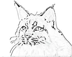misc coloring pages chat big cats