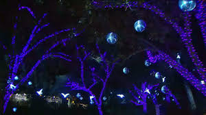 Stoneham Zoo Lights by 100 Stoneham Zoo Lights The Ultimate Venue Guide Exquisite