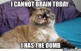 i can haz best funny cat memes pressroomvip part 48