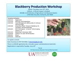 blackberries mississippi fruit and nut blog
