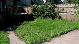 report long grass or weeds city of minneapolis
