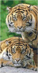 Animal Home Decor by Cross Stitch Sumatraanse Tigers Pattern Design Chart Feline Big