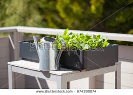 vegetables balcony stock images royalty free images u0026 vectors