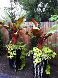 Plants For Patio by Outdoor Tropical Plants For Containers Darxxidecom