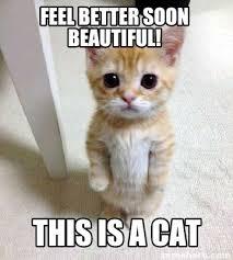 Soon Cat Meme - meme creator feel better soon beautiful this is a cat meme