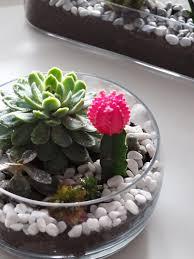 how to make your own cactus u0026 succulent terrarium u2013 a snippet of life