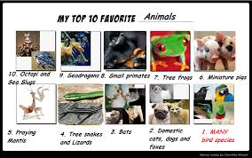 top 10 favourite animals meme filled by me by roses and feathers on