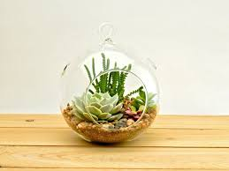 amazon succulents 14 truly affordable gifts for boss u0027s day glamour