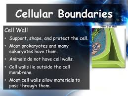 chapter 7 7 2 cell structure powerpoint and guided notes