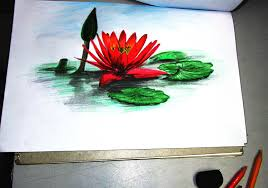 3d color sketch of water lily museum of art u0026 graphics