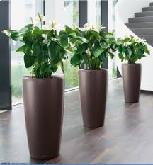 indoor plants nz indoor plants nz google search ideas for the house pinterest
