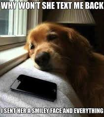 Sick Puppy Meme - gerelateerde afbeelding funny and funny quotes pinterest dog