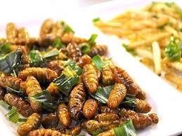 insectes dans la cuisine plat d insectes comestibles biologique elevage d insectes