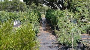 wholesale native plants hill country natives growers of texas hill country native trees