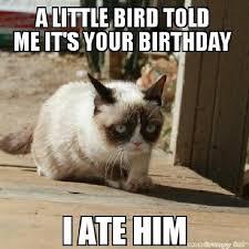 Meme Generator Grumpy Cat - grumpy cat meme grumpy cat pictures and angry cat meme