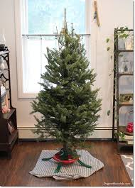 how to make a tree look fuller taller for free