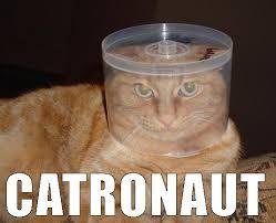 Astronaut Meme - astronaut cats archives organized online slots organized online slots