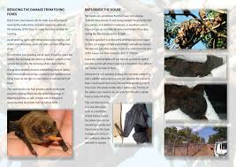 about bats u2013 wildcareinc