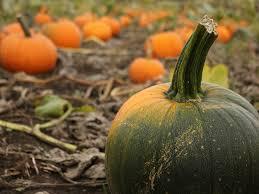 halloween activities in cambridgeshire lincolnshire