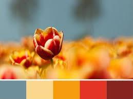 Brown Red And Orange Home Decor 33 Orange Color Schemes Inspiring Ideas For Modern Interior