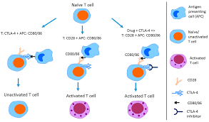 combination of colors ijms free full text a combination of immune checkpoint