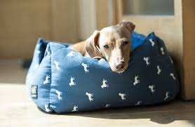 Best Dog Bed For Chewers Best Dog Beds The Ultimate Guide Practical Paw The Dog Lovers