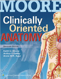 Anatomy And Physiology Pdf Free Download Download Clinical Oriented Anatomy Pdf 7th Edition Preview Med
