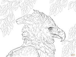 harpy eagle portrait coloring page free printable coloring pages