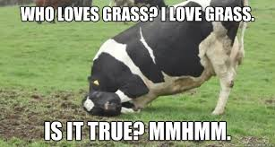 Grass Memes - who loves grass i love grass is it true mmhmm grass loving