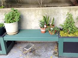 putting your houseplants outside for the summer a transplanted