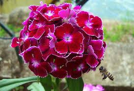 www flowers file flower png wikimedia commons