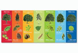 native uk plants plants u0026 flowers