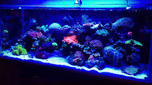 professional aquarium installation nj custom fish tank