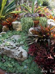 Succulent And Cacti Pictures Gallery Garden Design Succulent Garden Designs Isaantours Com