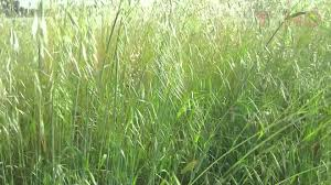 home garden design youtube tall grass plants for landscaping in urban u0026 suburban home garden