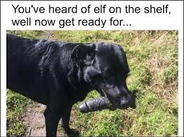 Sex Toy Meme - good boy with a sex toy funny memes daily lol pics