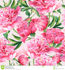 The Pink Peonies by Pink Peonies Botanical Watercolor Illustration Stock Illustration