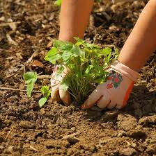 Gardening Pictures 11 Beginning Gardening Mistakes To Avoid Interiorsherpa