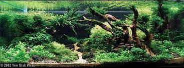 مسابقات بین المللی aga aquascaping تانك هاي 200 تا 320 لیتر سال