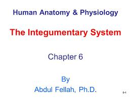 Human Anatomy Integumentary System 6 1 Human Anatomy U0026 Physiology The Integumentary System Chapter 6