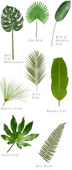 best 20 herb planters ideas on pinterest growing herbs exciting types of palm plants best 25 leaves ideas on pinterest