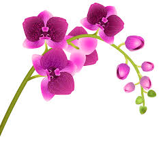 orchid flower orchid flower transparent png clip image gallery